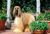 DOG 14 CE0006 01