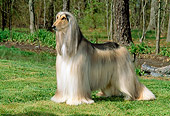 DOG 14 CE0008 01