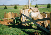DOG 14 CE0010 01