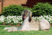 DOG 14 CE0013 01