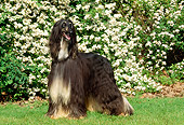 DOG 14 CE0014 01
