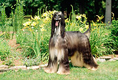 DOG 14 CE0015 01