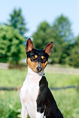 DOG 14 CE0016 01