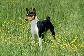 DOG 14 CE0017 01