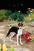 DOG 14 CE0020 01