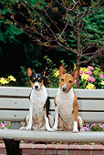 DOG 14 CE0023 01