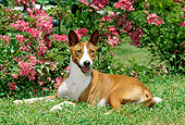 DOG 14 CE0027 01