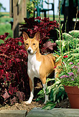 DOG 14 CE0028 01