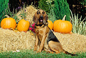 DOG 14 CE0030 01