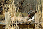 DOG 14 CE0038 01