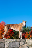 DOG 14 CE0039 01