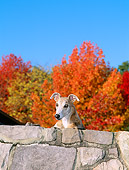 DOG 14 CE0040 01