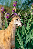 DOG 14 CE0041 01