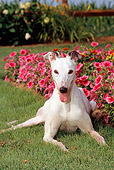 DOG 14 CE0043 01