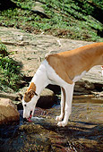 DOG 14 CE0046 01