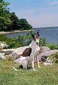 DOG 14 CE0047 01
