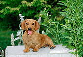DOG 14 CE0051 01