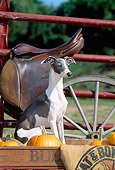 DOG 14 CE0054 01