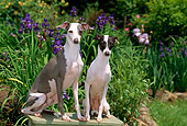 DOG 14 CE0055 01