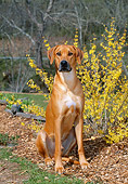 DOG 14 CE0058 01