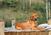 DOG 14 CE0059 01