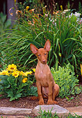 DOG 14 CE0061 01