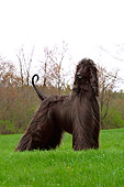 DOG 14 DC0002 01