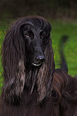 DOG 14 DC0004 01