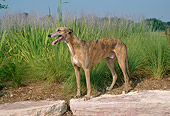 DOG 14 FA0001 01