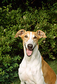DOG 14 FA0002 01