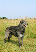 DOG 14 FA0003 01