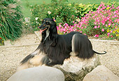 DOG 14 FA0004 01
