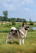 DOG 14 FA0005 01