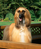 DOG 14 FA0006 01
