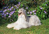 DOG 14 FA0008 01