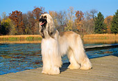 DOG 14 FA0009 01
