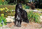 DOG 14 FA0010 01