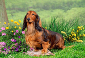 DOG 14 FA0011 01