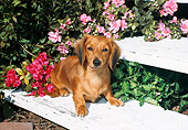 DOG 14 FA0013 01