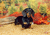 DOG 14 FA0016 01