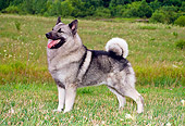 DOG 14 FA0017 01