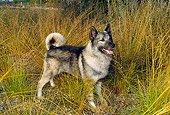 DOG 14 FA0018 01