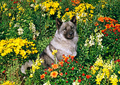 DOG 14 FA0020 01