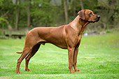 DOG 14 JD0002 01