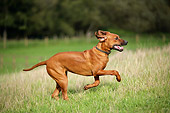 DOG 14 JD0004 01