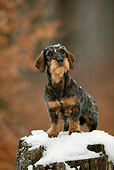 DOG 14 KH0001 01
