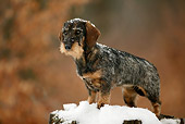 DOG 14 KH0002 01