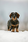 DOG 14 KH0003 01