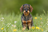 DOG 14 KH0007 01