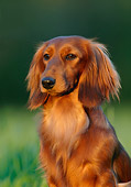 DOG 14 KH0010 01